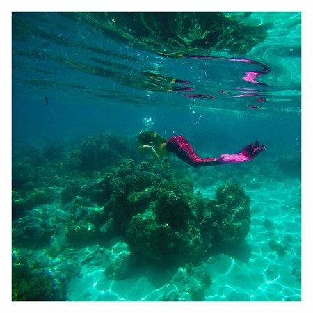 ليجيان, إندونيسيا: Exploring the corals around Gili T