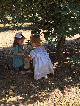 Ellijay, GA: pickin' apples