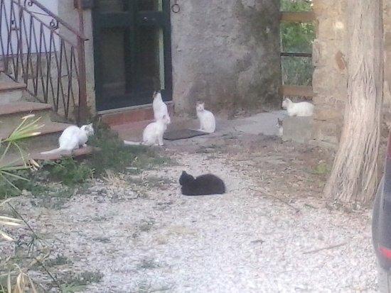 Risultati immagini per colonie di gatti