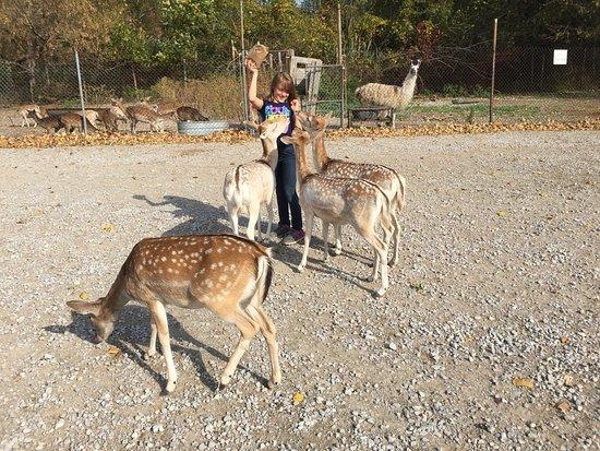 Lagoon Deer Park: DEER EVERYWHERE