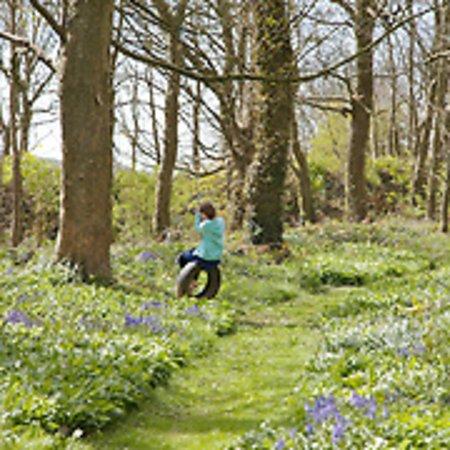 Braunton, UK: Bluebell woods