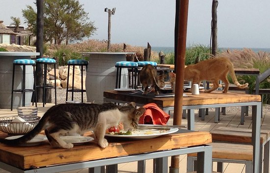 Imi Ouaddar, Marokko: Paradis Plage Taghazout Insalubre , malodorant et inadmissible !!!! Une horde de chats dégoutant