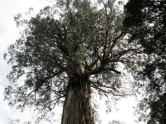 Ada Tree