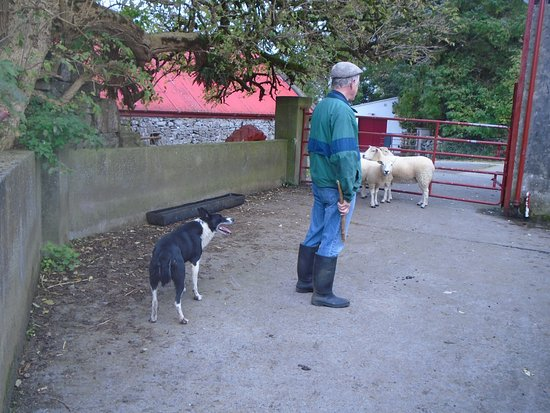 Rathbaun Farm: Getting ready to unleash the sheep