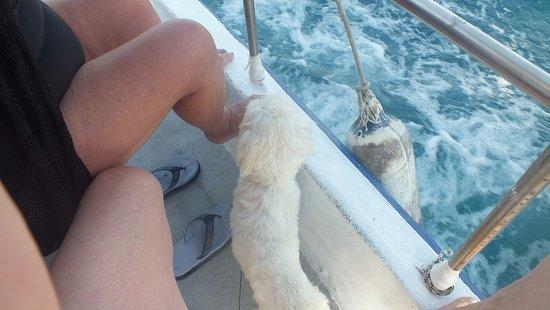 Yiannaki Hotel: Alex (le chien), notre accompagnateur lors d'une sortie en mer