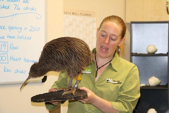 West Coast Wildlife Centre : Meet Kim - Our Senior Kiwi Ranger !