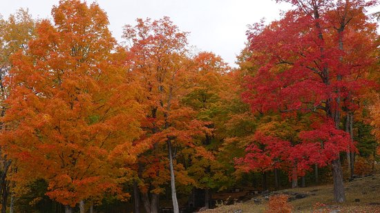 Manchester, VT: Mid October Tour with Sharon.