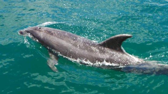Paihia, Nuova Zelanda: Dolphins, the Hole in the Rock, lunch on Otehei Bay, view from hilltop on Urupukapuka Island loo