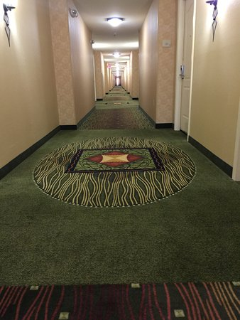Carpet Cleaning Cheyenne Wy