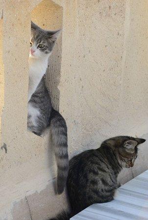 Ortahisar, Turquía: 敷地にたくさんいる子猫たちです