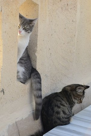 Ortahisar, Turkiet: 敷地にたくさんいる子猫たちです