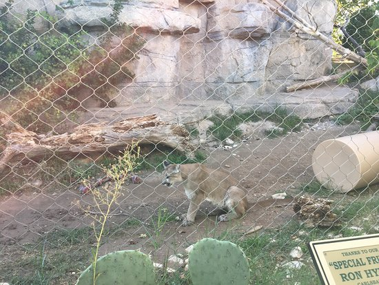 Zoo Picture Of Living Desert Zoo And Gardens State Park Carlsbad Tripadvisor