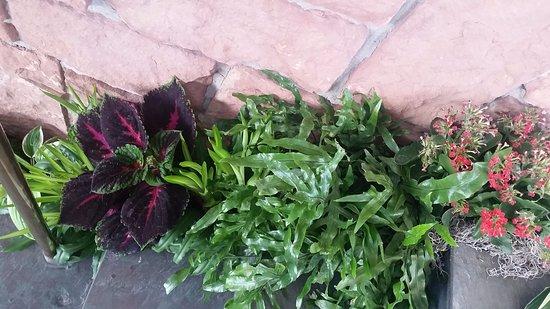 Red Butte Garden: Coleus display on indoor steps