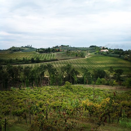 Certaldo, Italia: View of vineyards from the villa.