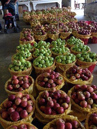 Harrisburg, PA: 1/2 bushel of various apples
