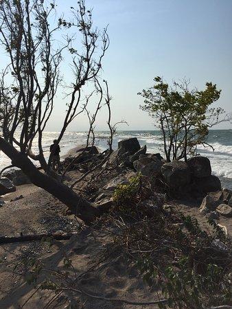 Point Pelee National Park: photo7.jpg