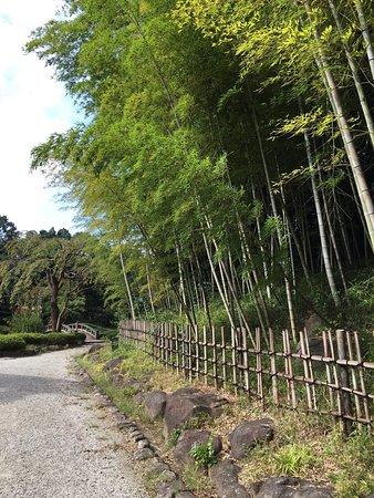 Hiratsuka, Japan: 公園内、日本庭園