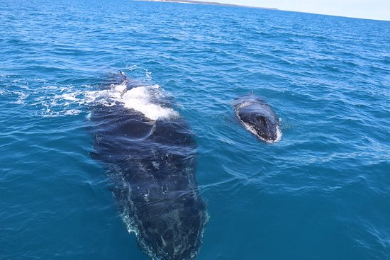 Hervey Bay, Australien: What an awesome day, the whales just drifted by and Decided to play