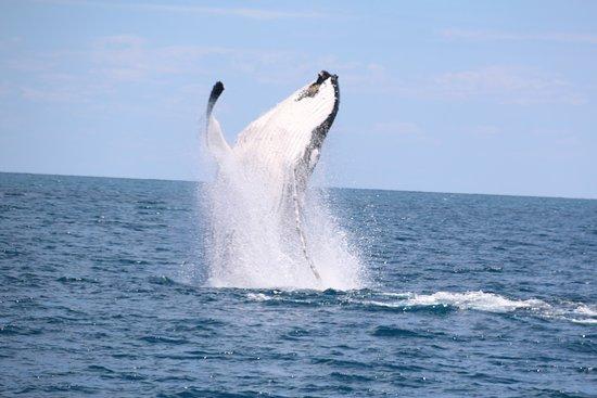 Hervey Bay, Australien: photo0.jpg