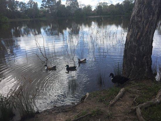 Benalla, Australia: photo1.jpg