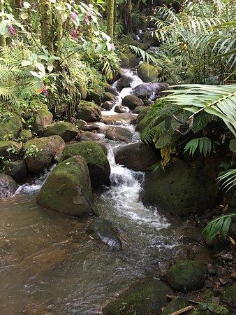 Papaikou, Χαβάη: photo3.jpg