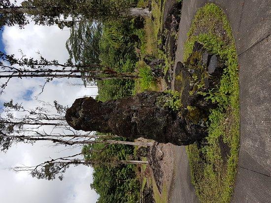 Pahoa, Hawaje: Lava Tree