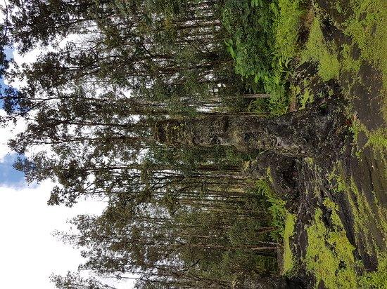 Pahoa, HI: Lava Tree