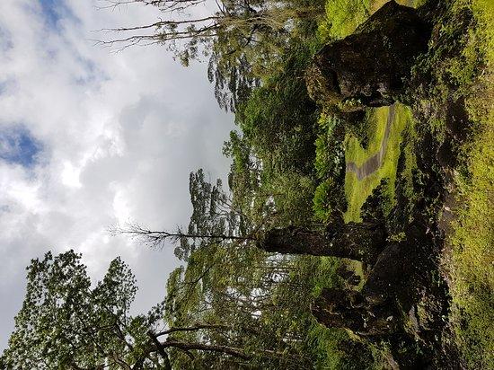 ปาฮัว, ฮาวาย: Lava Tree
