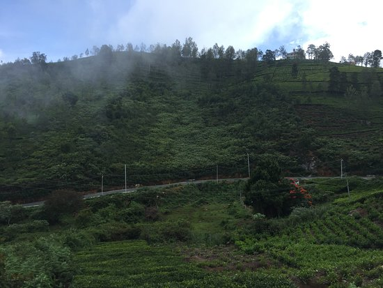 Coonoor, Índia: Photo2