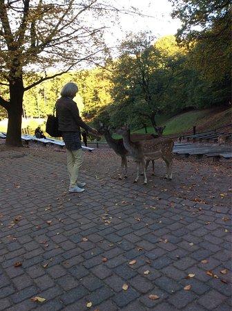 Rosengarten, Tyskland: photo6.jpg