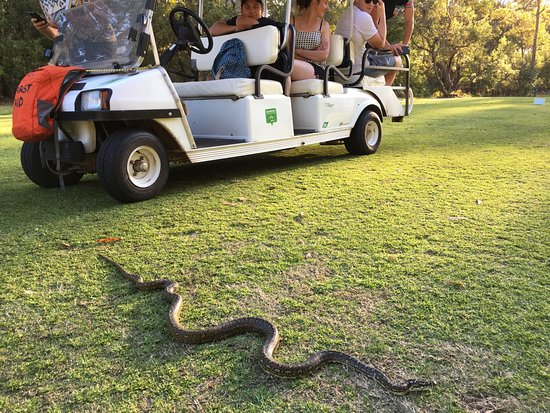 Nelson Bay, Australia: Snakes alive! A python and a red belly black plus an echidna, all on one tour! Great day!