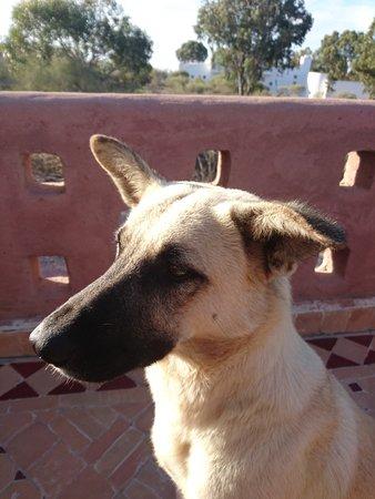 Ghazoua, Marruecos: Touki