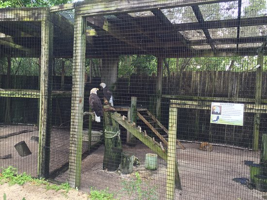 Peace River Wildlife Center: photo4.jpg