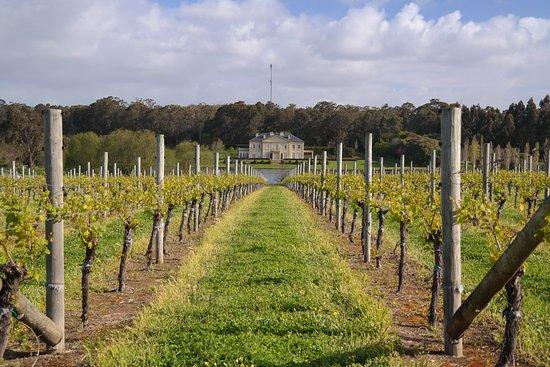 Wilyabrup, Austrália: Fraser Gallop Vineyard