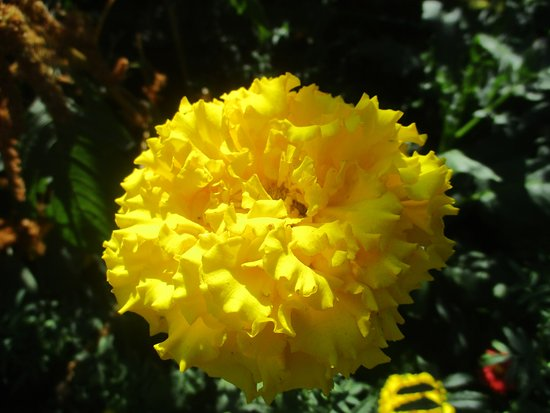 Claude Monet's House and Gardens: Obligatory Flower Photo