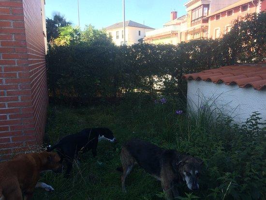 """Liencres, España: Vista del jardín con los """"niños"""" husmeando :)"""