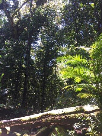Daintree Region, Australia: Amazing place to visit