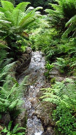 Menai Bridge, UK: Water running down a small stream through Tree Ferns