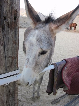 Petra Bed and Breakfast : Cute little donkey