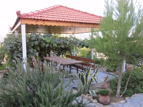 Petra Bed and Breakfast : Lovely garden