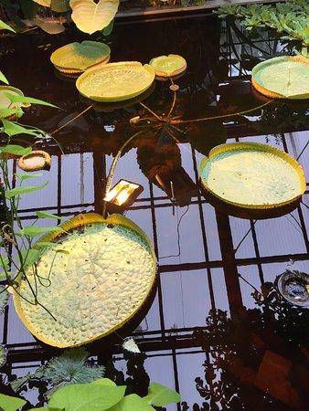Botanischer Garten Kiel: Auch im 🍂 lohnt es hin zu gehen 🚶🏼