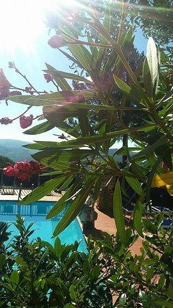 San Donato in Poggio, Italia: FB_IMG_1476528361314_large.jpg
