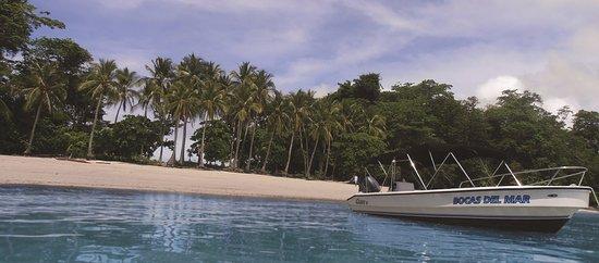 Hotel Bocas del Mar: Gulf of Chiriqui boat trip in the hotel