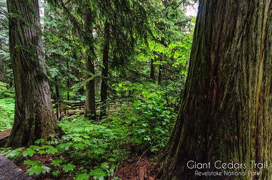Revelstoke, Canadá: Giant Cedars Trail