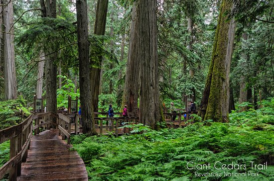 ‪‪Giant Cedars Boardwalk Trail‬: Giant Cedars Trail‬