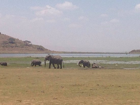 Amboseli National Park, Kenia: photo1.jpg