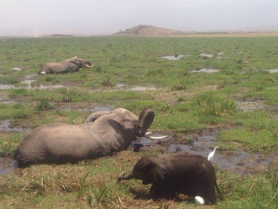 Amboseli National Park, Kenia: photo2.jpg
