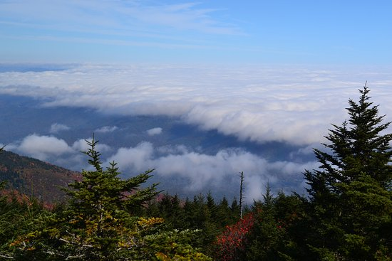 Burnsville, NC: Above the clouds at Mt Mitchell