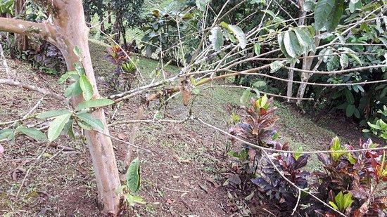 Casa Botania Bed & Breakfast: Botanische tuin