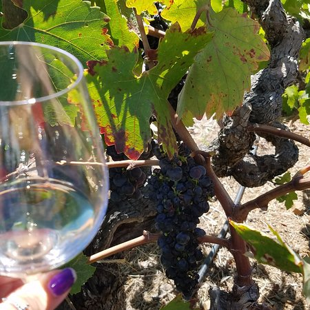 Geyserville, Californie : Vine to glass